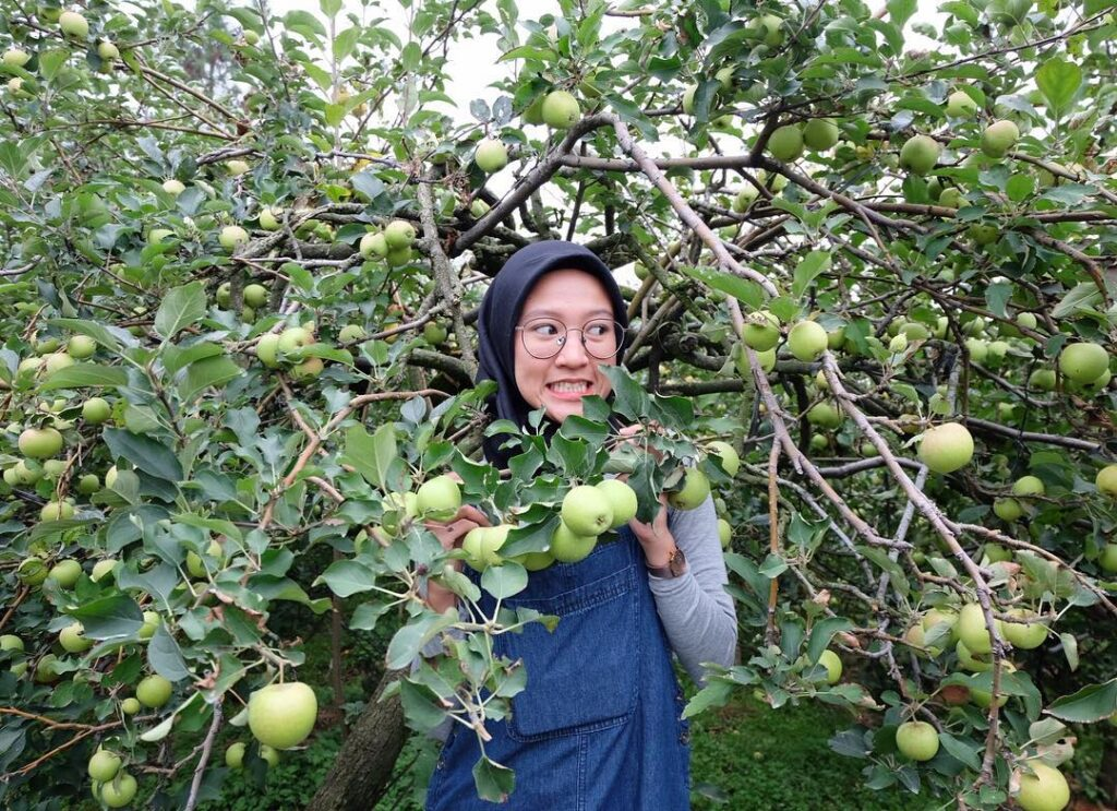 Wisata Petik Apel Malang, Langsung Makan